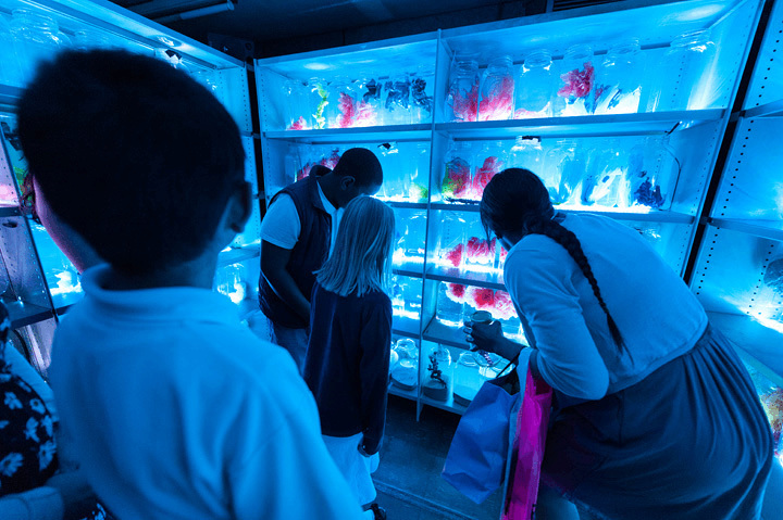 3 school children and a perform examine a room full of plastic sweet bottles full of different coloured plastic bags, shaped to look like coral.